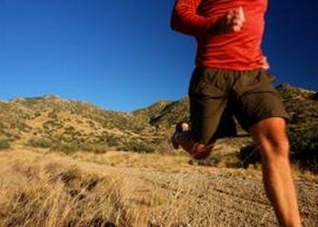 La course à pied est l'activité physique la plus adaptée à l'organisme humain