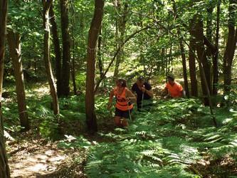 TSY - Le Trail des Sources de l'Yvette